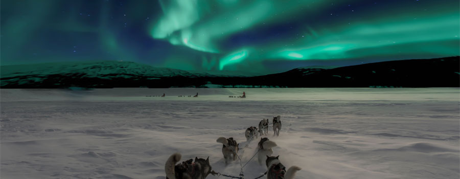 Dog-Sleigh-Norway