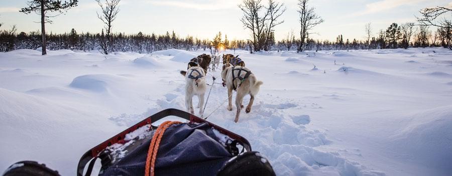 Dog-Sled-Finland